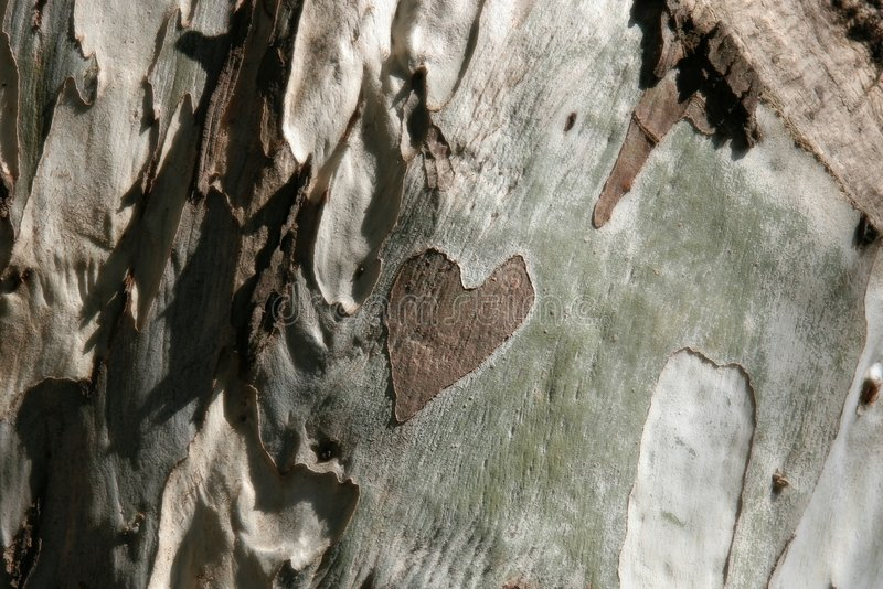 Heart on wood stock image