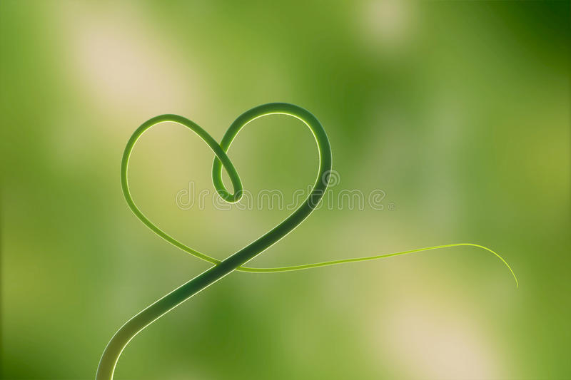 Hearth of the nature which is consist of the wonderful leaf. Green life concept,. 3D high realistic rendering stock image