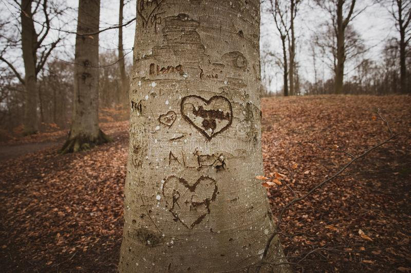 Hearth on a tree. Several marks on a tree stock photo