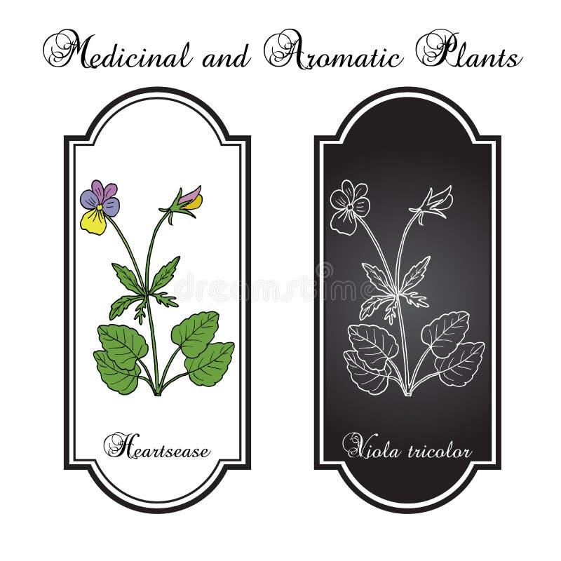 Heartsease Viola tricolor, sierplant en geneeskrachtige plant vector illustratie