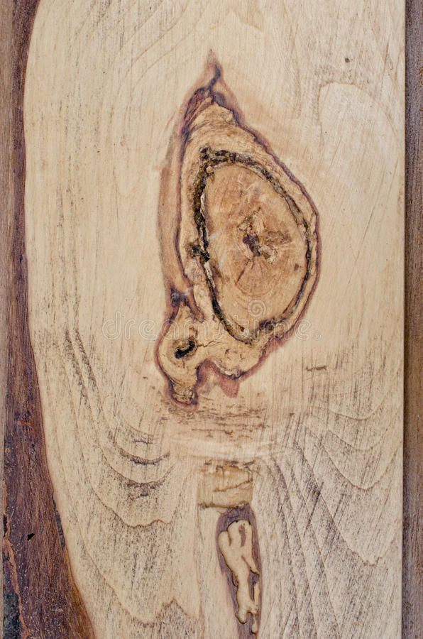 Heartwood av ekbrädet royaltyfria foton