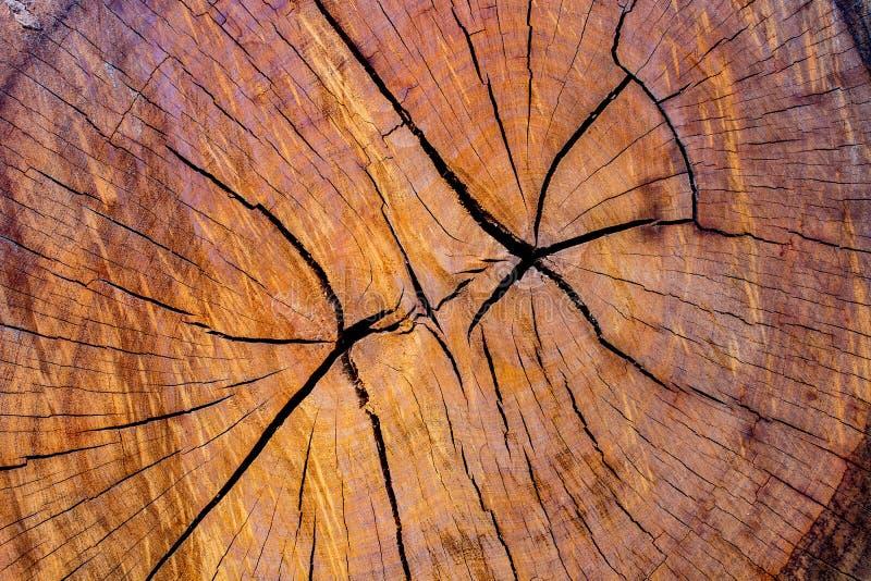 Heartwood den Wood yttersidan för bakgrund royaltyfri fotografi