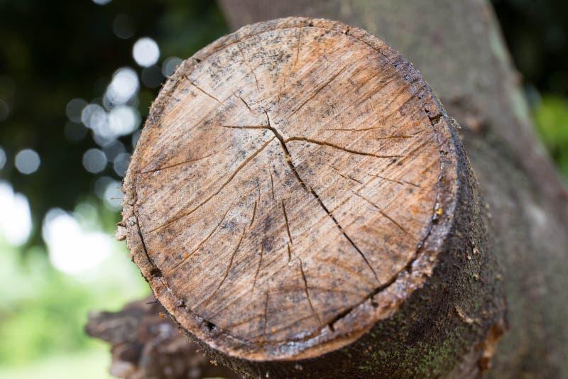 Heartwood i skog arkivfoton