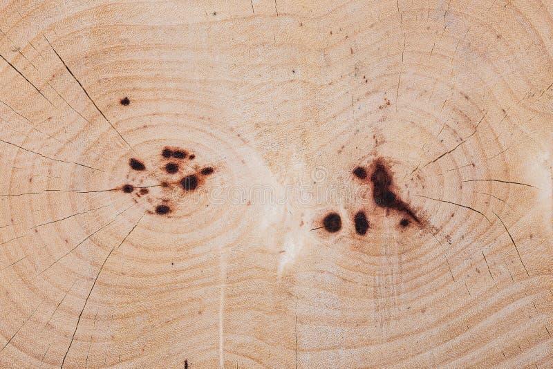 Heartwood tekstura cutted drzewny bagażnik zdjęcia royalty free