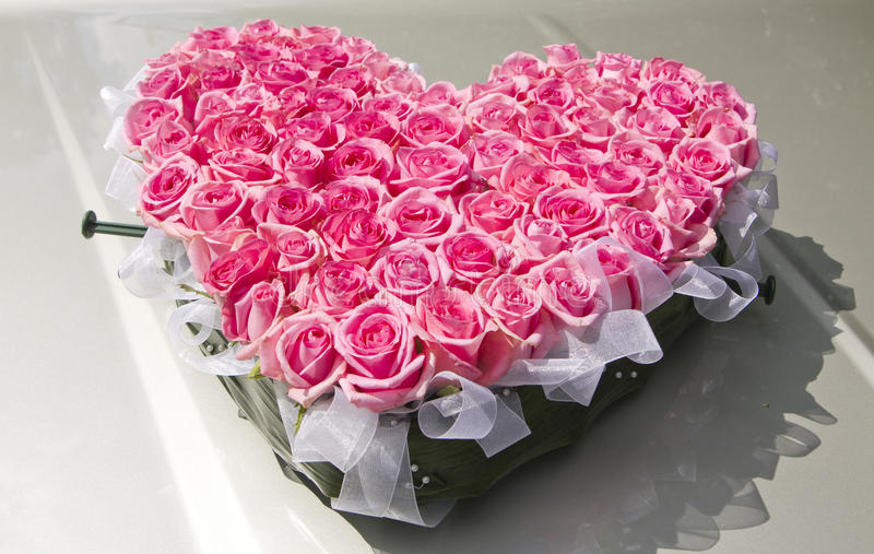Heat From Pink Roses Stock Image