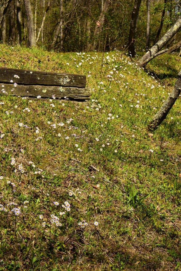 Heath Asters blanco A ericoides fotografía de archivo libre de regalías