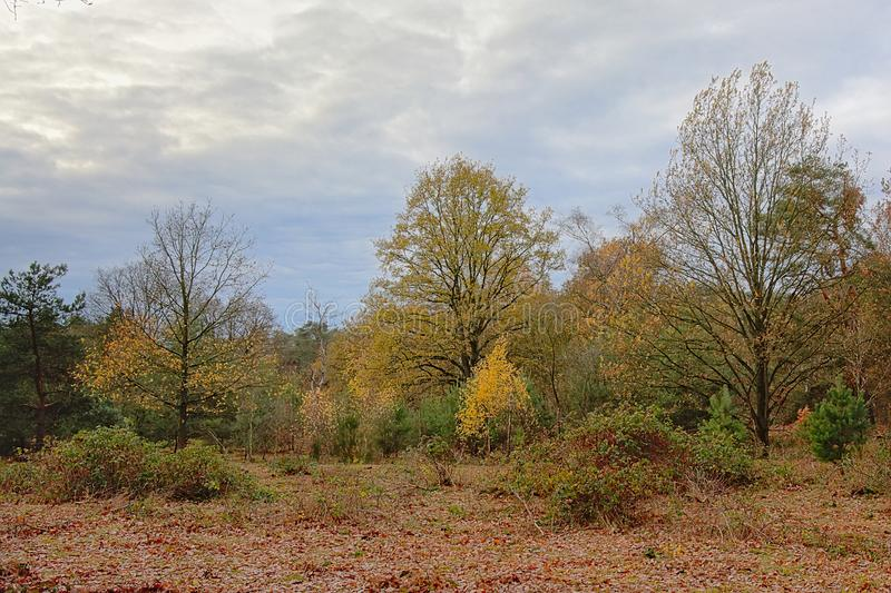 Heath and forest in Heidebos nature reserve, wachtebeke, Belgium. Heath and forest in Heidebos nature reserve on a cloudy autumn day, Wachtebeke, Belgium royalty free stock photos