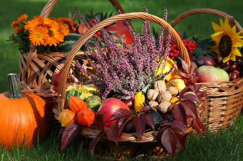 Download Heather In Autumn Wickers Stock Photo - Image: 26963710