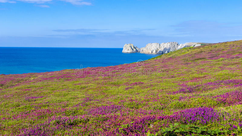 Heather Brittany France fleurissante photographie stock