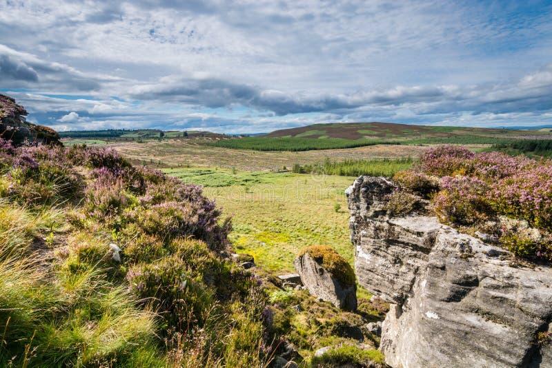 Heather a couvert des rochers de Wanney image libre de droits