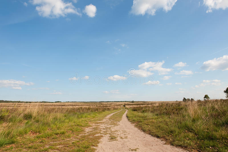 Download Heather fields stock photo. Image of horizon, dutch, fields - 9702462