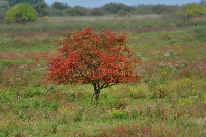 Tree in autumn collors royalty free stock photography