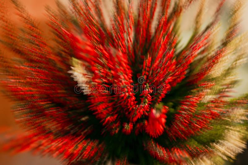 Heather moved by lenses, macroed and abstracted. Lens movement play. I was fascinated by heather, but wanted to make it look more artistic, so I made it moving stock photography