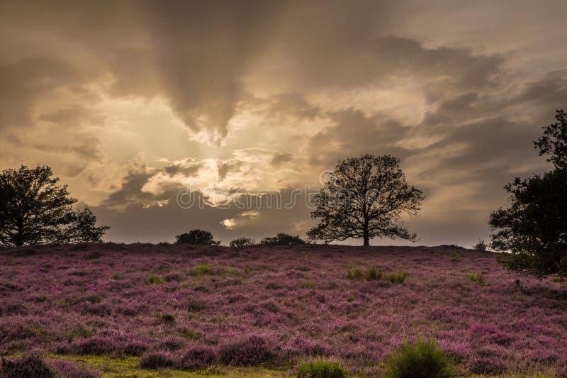 Heathland стоковая фотография rf