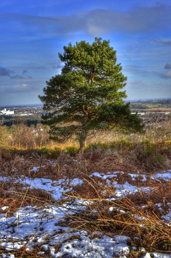 heathland royaltyfri fotografi