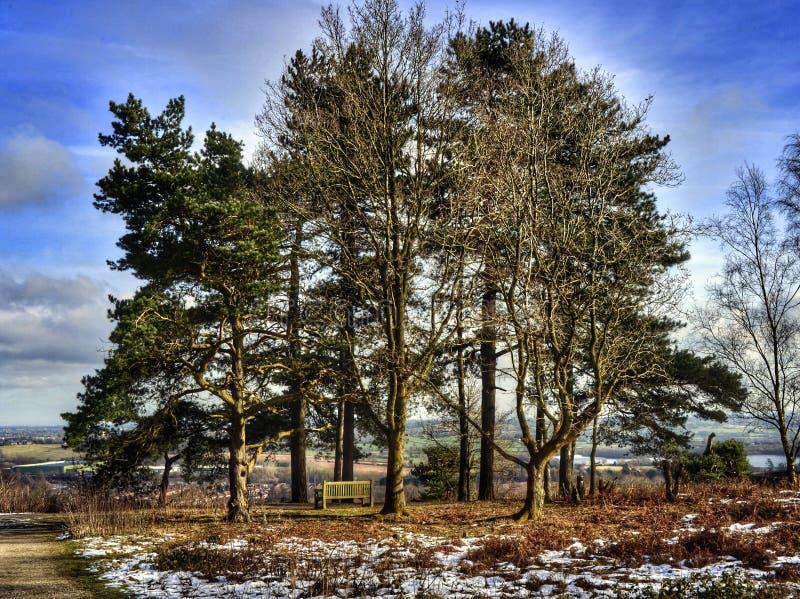 heathland royaltyfria bilder