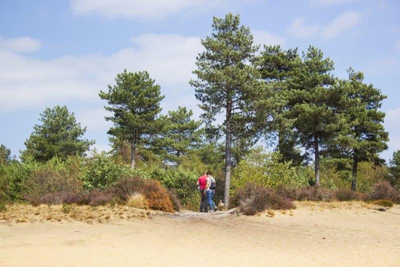 Heathland i nationalparken Maasduinen i Nederländerna - coupl royaltyfria bilder