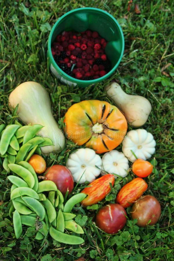 Harvest of heirloom organic fruit and vegetables royalty free stock image
