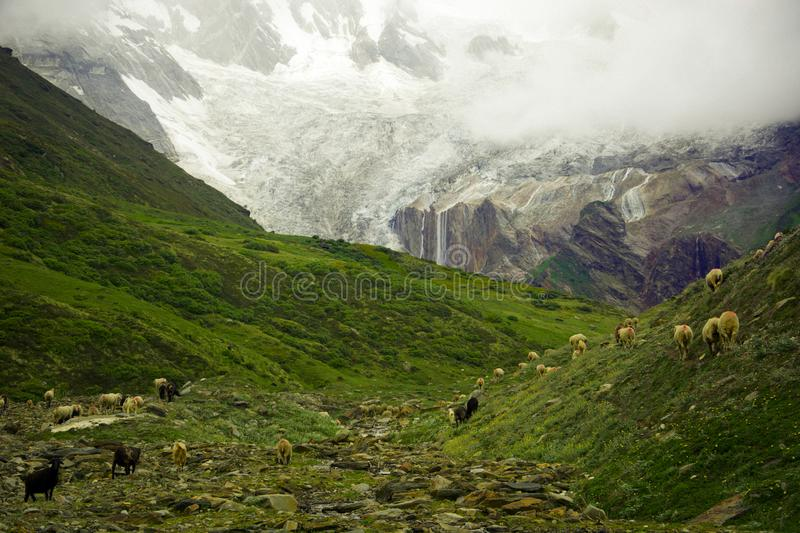 The heaven. Taken from panchachuli base camp district pithoragarh uttarakhand india royalty free stock photography