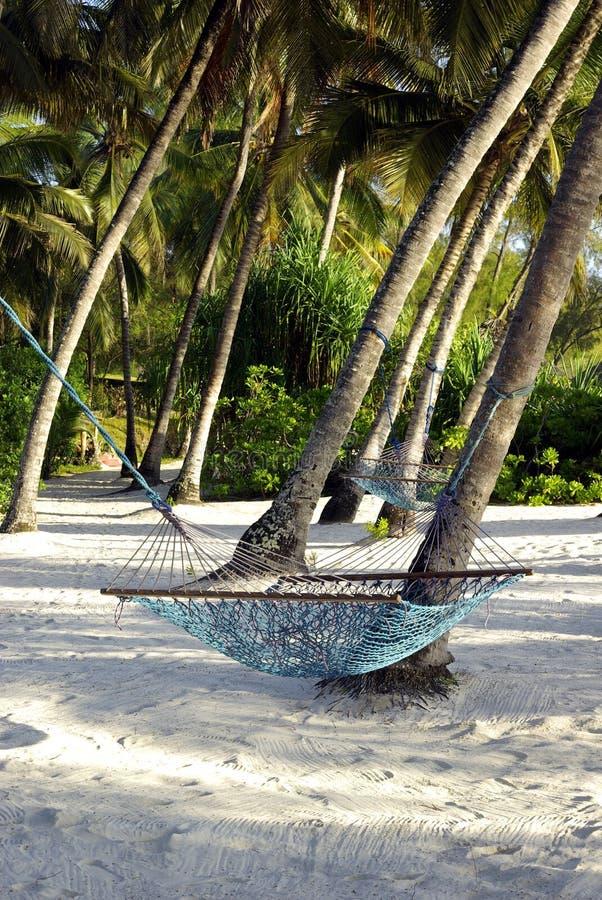 Heavenly beach with hammock