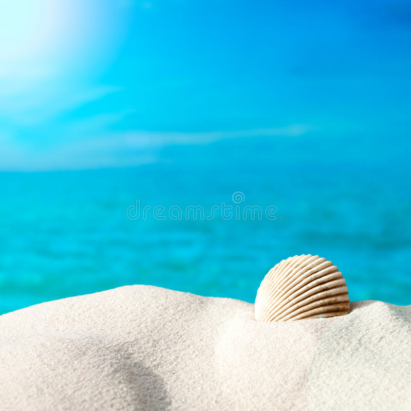 Download Shell on the beach stock image. Image of ocean, pacific - 30046429