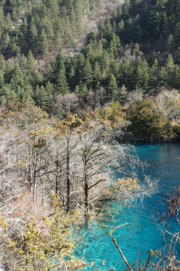 Heavenly Jiuzhaigou. Scenic view at heavenly Jiuzaigou, a nature reserve and national park situated at Sichuan China royalty free stock photo