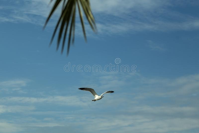 Heavenly landscape with flying seagull and detail of palm tree. A seagull flying in the cloud above the port of Kavala over the Aegean Sea, Greece stock photo