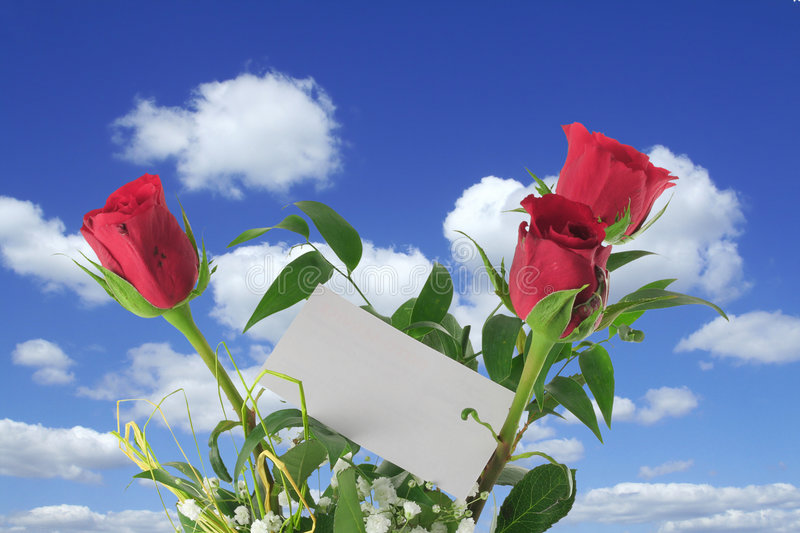 Download Heavenly roses stock image. Image of detail, business - 1628737