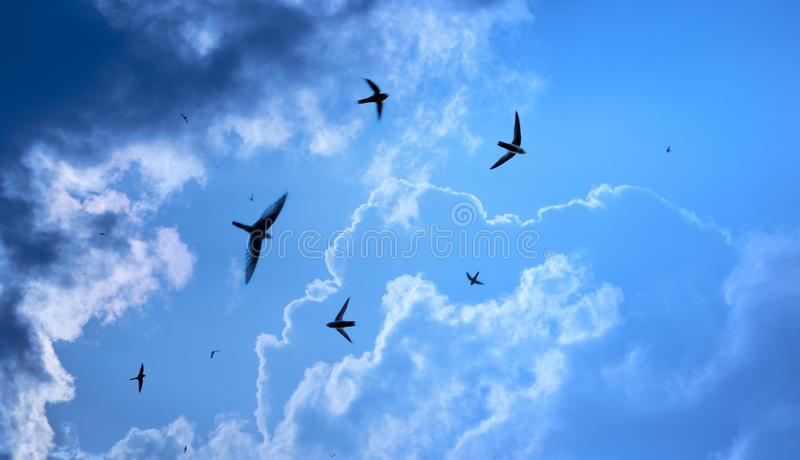 Heavenly swallows stock photography