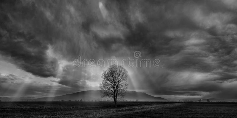 Heavens above. Dramatic skyline with a lonely tree on the foreground royalty free stock image