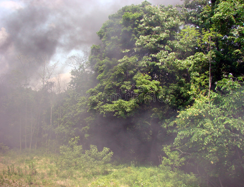 Heavy Fire Smoke over Trees in the Forest stock image