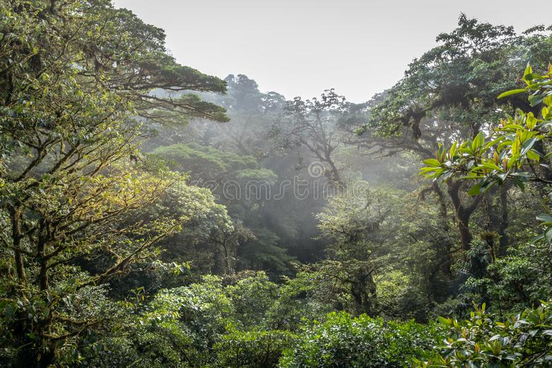 Heavy fog and mist over the jungle. In Mistico Park Costa Rica stock photo