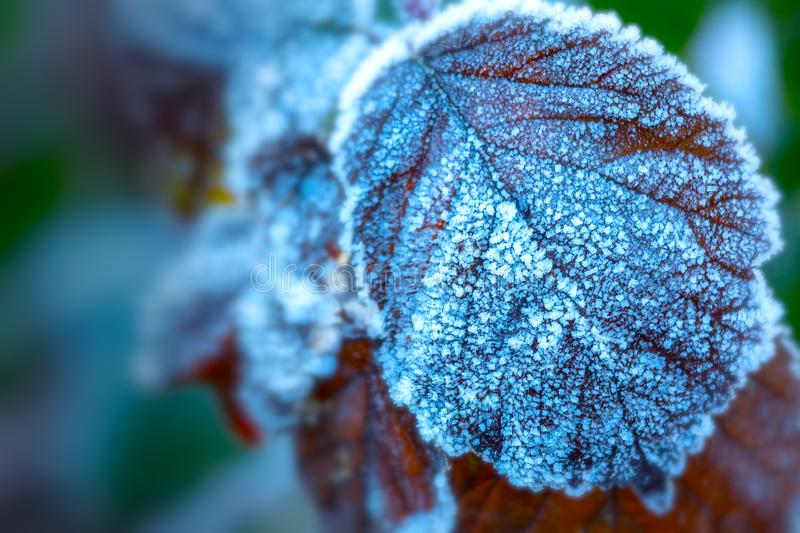Heavy frost on leaf. Heavy frost on leaf in winter during early morning `blue hour stock image