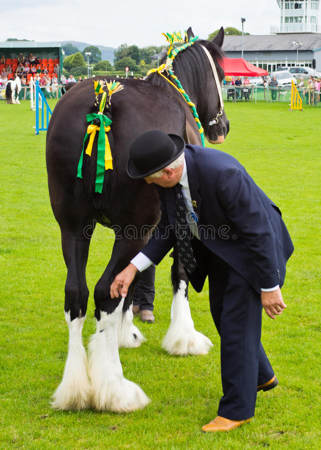 Heavy horse Cartmel Show 2011 stock photography