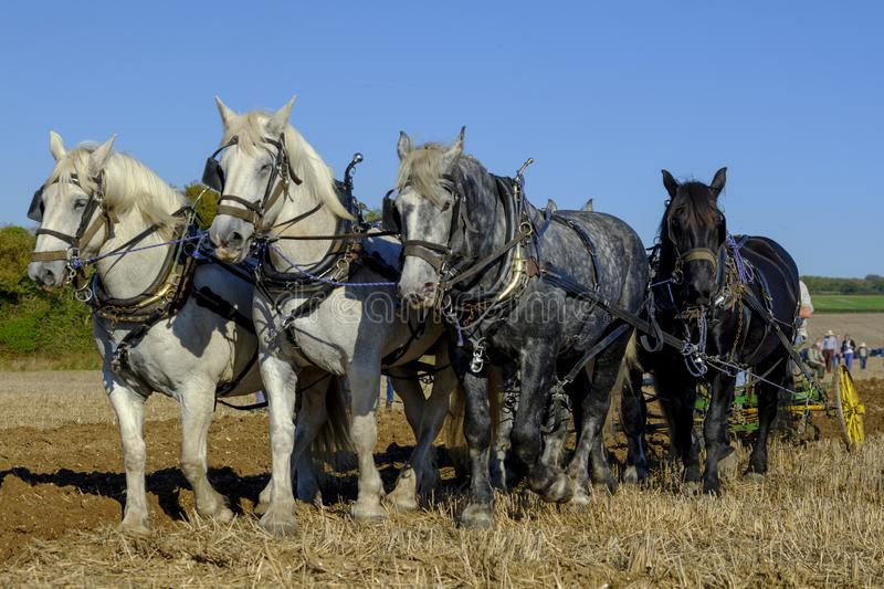 Heavy Horses ploughing competition at the SCHHA - South Coast Heavy Horse Association - annual show near Soberton 2018, Hampshire royalty free stock photography