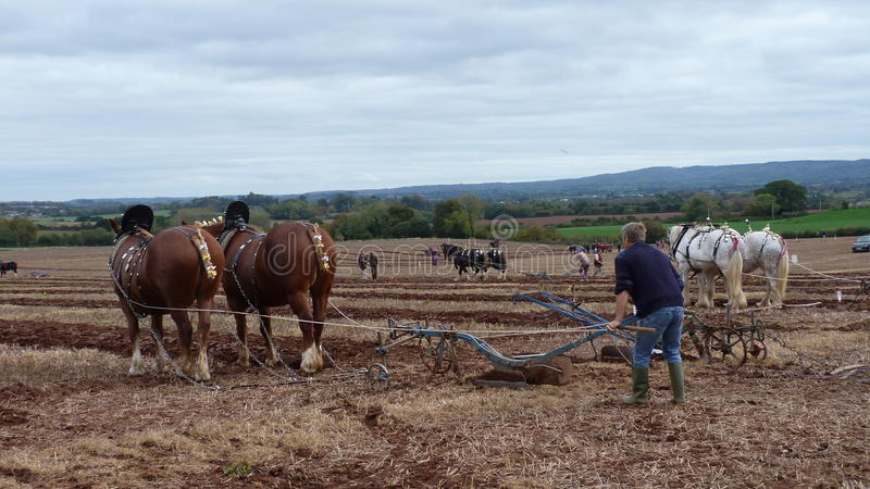 Heavy Horses at a Ploughing Match in England stock photography