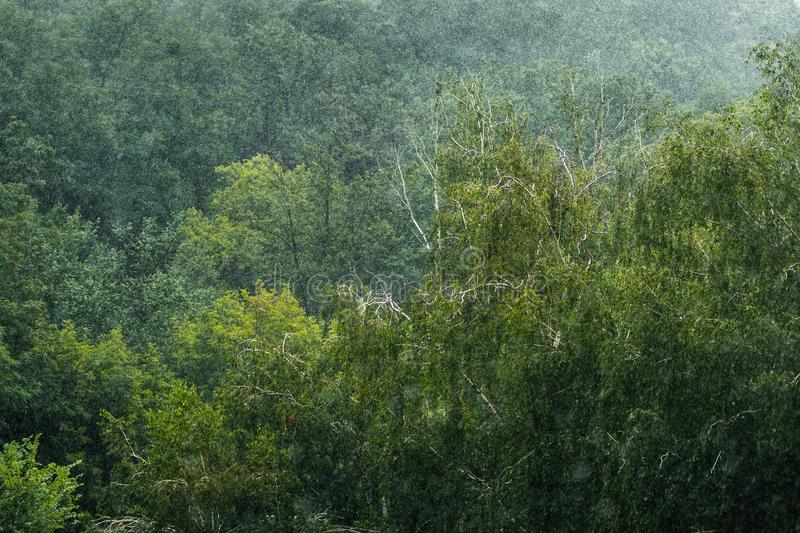Heavy pouring rain over green tropical forest trees. Rainstorm downpour autumn weather. Nature, water, shower, summer, wet, outdoor, drop, background, rainy royalty free stock photography