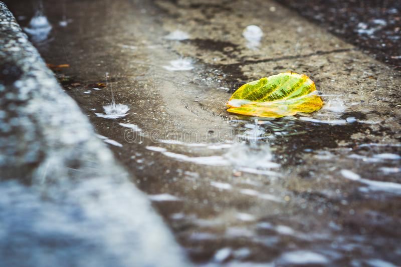 Heavy rain drops falling on city street with a autumn leaf. Heavy rain drops falling on city street with a autumn leaf stock images