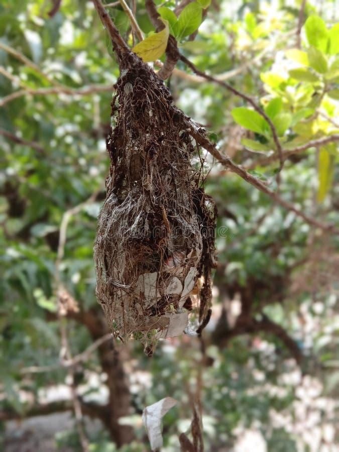 After the heavy rain,the harsh nest broke stock photos