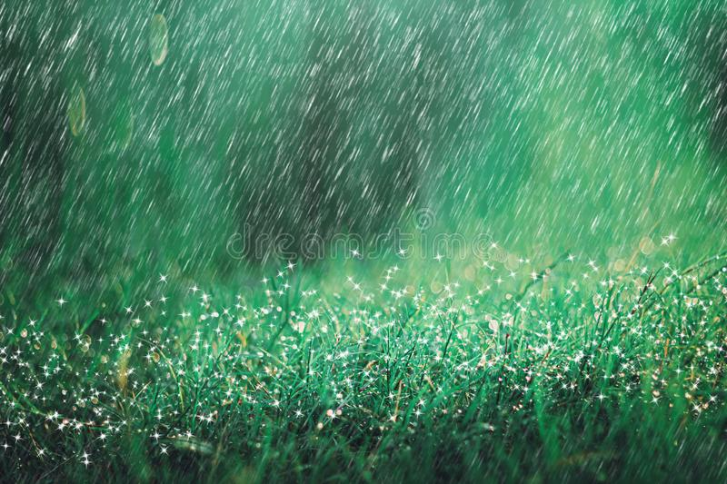 Heavy rain shower on meadow background with sparkle and bokeh. Raining in nature backdrop stock photo