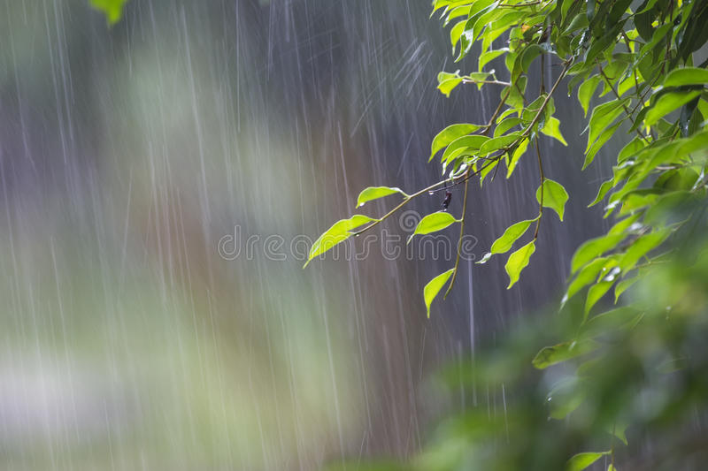 Heavy Rain stock photo