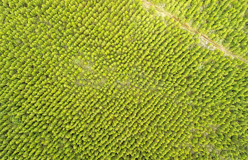Drone Reforestation Stock Images - Download 8 Royalty Free