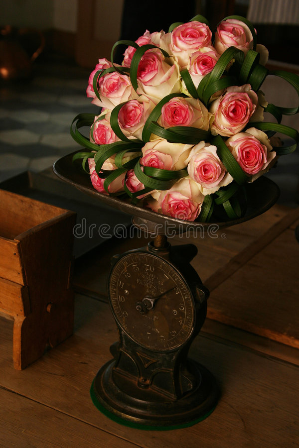 Heavy Roses. Pink roses on a scale stock image