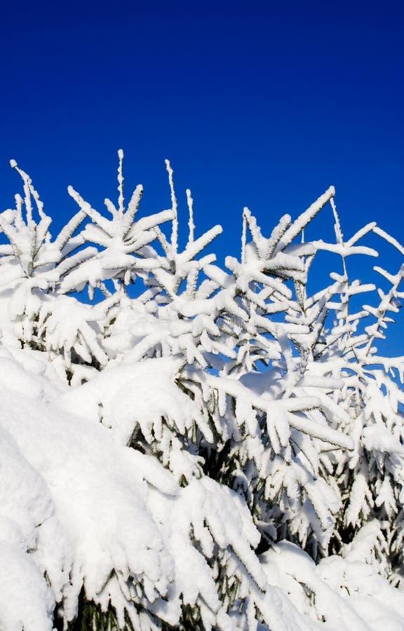 Free Heavy Snow Stock Image - 1844191