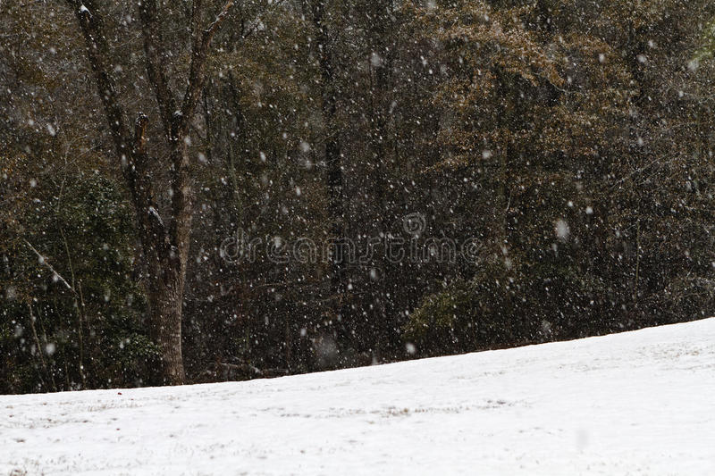 Download Heavy Snow Fall In A Forest Clearing Stock Image - Image: 27492887
