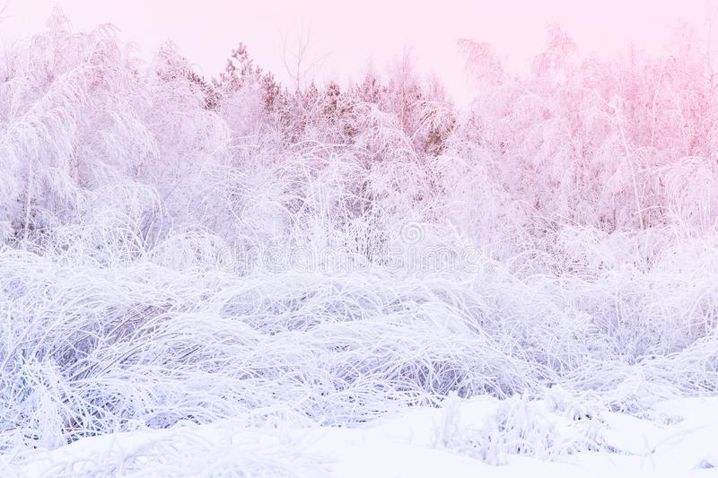 After heavy snowfall in mixed forest. Blizzard concept stock photography