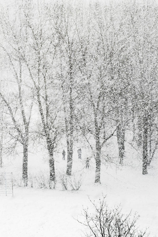 Heavy snowfalling royalty free stock images