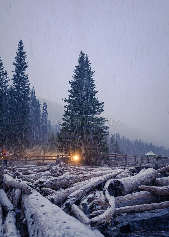 Heavy snowing on pine tree with wood logs on winter royalty free stock photos