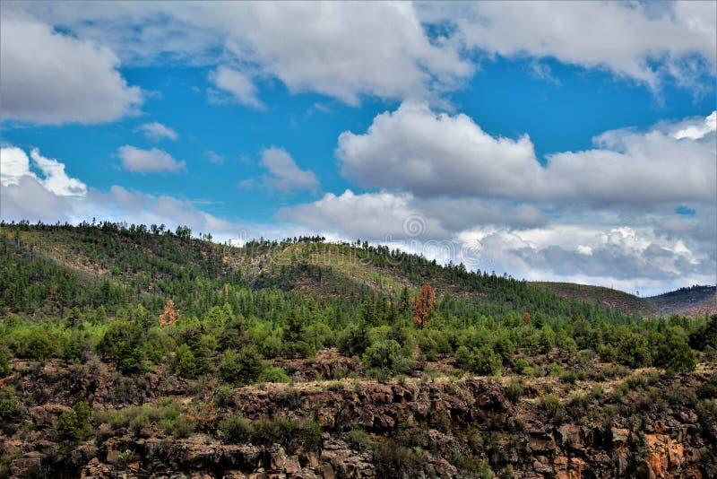 Heber Overgaard,纳瓦霍县, Sitgreaves国家森林,亚利桑那,美国 图库摄影
