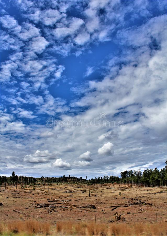Heber Overgaard,纳瓦霍县, Sitgreaves国家森林,亚利桑那,美国 免版税库存图片
